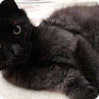 Adopt A Pet :: Shadow - Woodland, CA