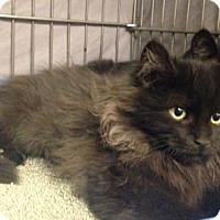 Adopt A Pet :: LA-Reisling - Devon, PA