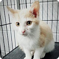 Adopt A Pet :: Sonny - Paducah, KY