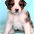 Adopt A Pet :: Orban