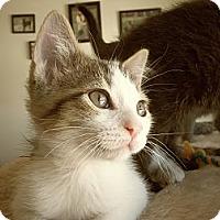 Adopt A Pet :: Genesis - Silver Lake, WI