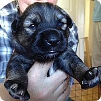 Adopt A Pet :: Connor - Los Angeles, CA