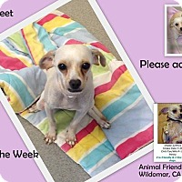 Adopt A Pet :: Chanel - Lake Elsinore, CA