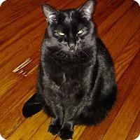 Adopt A Pet :: Coal - Bentonville, AR