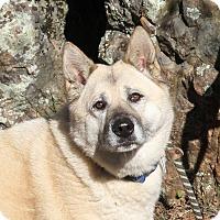 Adopt A Pet :: Quili (say Keelee!) - Sacramento, CA