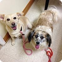 Adopt A Pet :: FoxyandMidge - Greenville, SC
