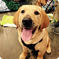 Adopt A Pet :: Bailey - Hillsboro, IL