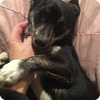 Adopt A Pet :: Hank in CT - Manchester, CT