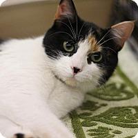Adopt A Pet :: Frankie - Sacramento, CA