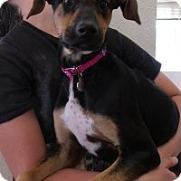 Adopt A Pet :: RENA - Corona, CA