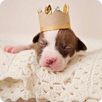 Adopt A Pet :: Michelle Visage - Greensboro, NC