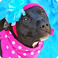 Adopt A Pet :: LOLLY - Louisville, KY