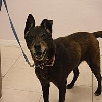 Adopt A Pet :: Nina - Malabar, FL