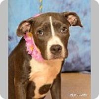 Adopt A Pet :: Peaches - Pittsboro, NC
