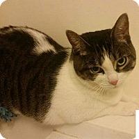 Adopt A Pet :: Maisie - Hamilton, ON