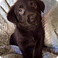 Adopt A Pet :: Leah D3275 - Shakopee, MN