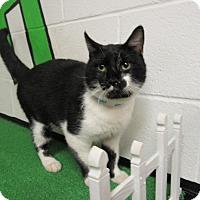 Adopt A Pet :: 16C-1326 (10/20) - Rome, GA