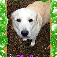 Adopt A Pet :: Lola - Georgetown, KY