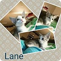 Adopt A Pet :: Lane - joliet, IL