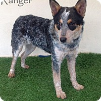 Cattle Dog Mix Dog for adoption in San Diego, California - Ranger