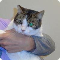 Adopt A Pet :: Cheria - Wildomar, CA