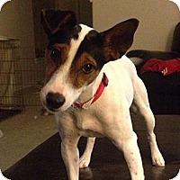 Adopt A Pet :: Archie in Austin - San Antonio, TX