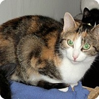 Adopt A Pet :: Sunshine - Orillia, ON