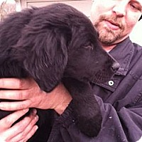 Adopt A Pet :: Dolly - Denver, CO