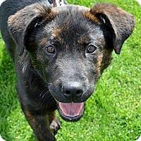 Adopt A Pet :: LEXI - Torrance, CA