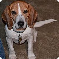 Adopt A Pet :: Lenny - Novi, MI