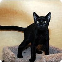 Adopt A Pet :: Potter - Farmingdale, NY