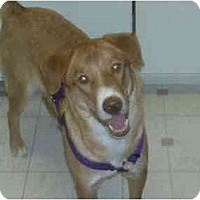 Adopt A Pet :: Honey,(URGENT)FL - Miami Beach, FL