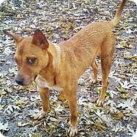 Adopt A Pet :: Quiz - Toledo, OH