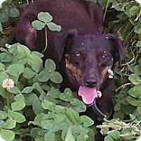 Adopt A Pet :: Fannie Mae - Glastonbury, CT