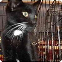 Adopt A Pet :: Fenner - Riverside, RI