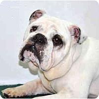 Adopt A Pet :: Pudge - Port Washington, NY