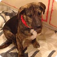 Adopt A Pet :: Kelli - Hollis, ME