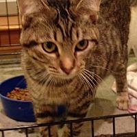 Adopt A Pet :: Audrey - Wichita Falls, TX