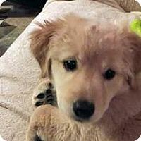 Adopt A Pet :: Aila - Austin, TX