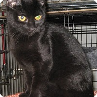 Adopt A Pet :: Smarty Pants - Dallas, TX