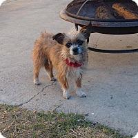 Adopt A Pet :: Holly - Las Vegas, NV