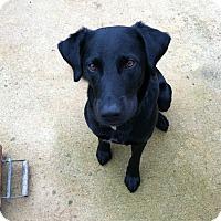 Adopt A Pet :: Banjo - Homewood, AL