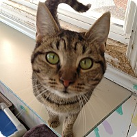Adopt A Pet :: Thelma - Fremont, OH