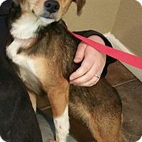 Adopt A Pet :: Ellie Mae - Lisbon, OH