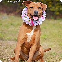 Adopt A Pet :: Annabelle - Fort Valley, GA