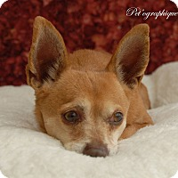 Adopt A Pet :: Paco - Las Vegas, NV