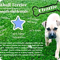 Adopt A Pet :: Charlie - Portland, IN