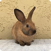 Adopt A Pet :: Lo mein - Bonita, CA