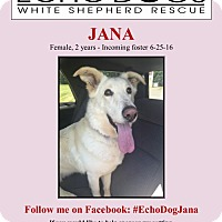 Adopt A Pet :: Jana (MA) - Hooksett, NH
