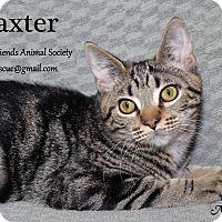 Adopt A Pet :: Baxter - Ortonville, MI